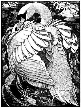 Quietude of Swans by Colin See-Paynton  Wood Engraving 20 x 15cm
