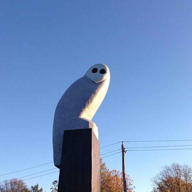 Good morning Mr Owl. Beautiful blue background