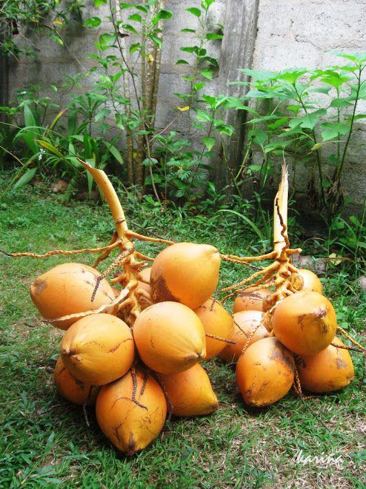 """кокосы королевские - отличный, прямо-таки """"королевский"""" завтрак, если вы в тропиках"""