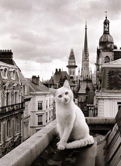 25 atemberaubende Fotos von Katzen an wunderschönen Orten auf der ganzen Welt – Katzen