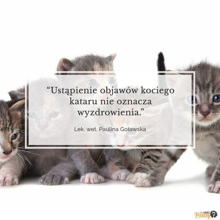 Ustąpienie objawów kociego kataru nie oznacza wyzdrowienia!