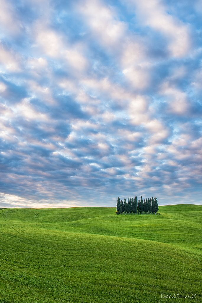 The Cypress Bunch by Leane on 500px