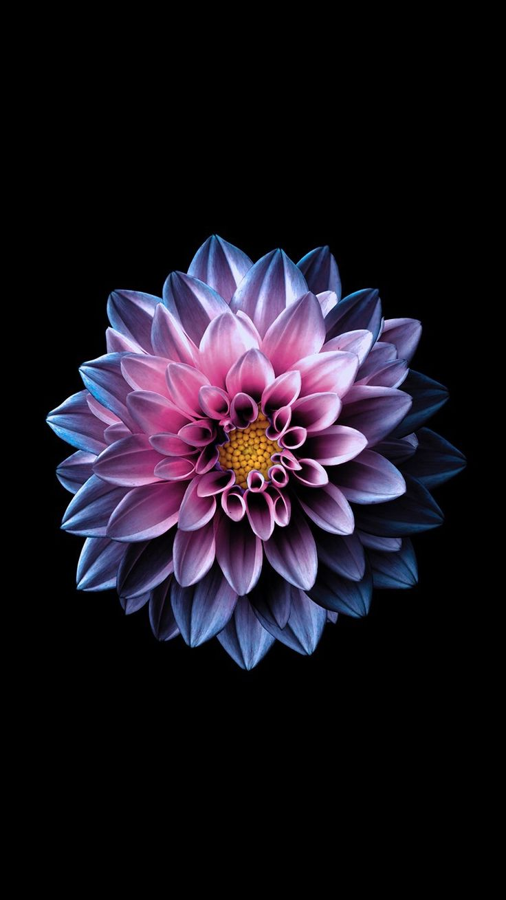 Bright flower wallpaper for your iPad from Everpix