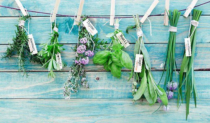 ThePerfectYou.nl Maak een kruidentuin binnen - met leuke kruidenplantjes - ThePerfectYou.nl