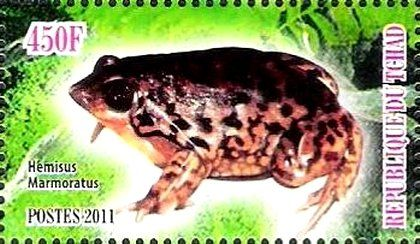 Stamp: Hemisus Marmoratus (Cinderellas) (Chad) Col:TD 2011-12/4