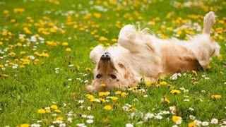 Piticul de Grădină: Câine vs. Grădină