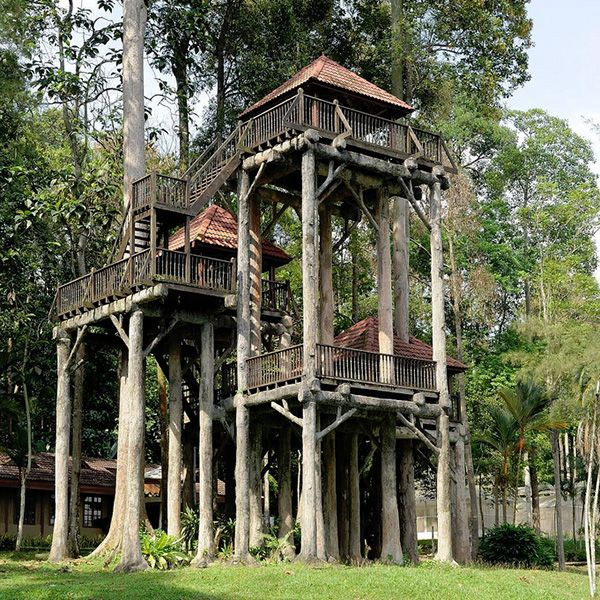 25 best ideas about amazing tree house on pinterest