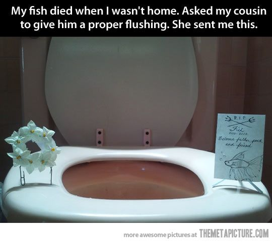 Funeral for a fish.