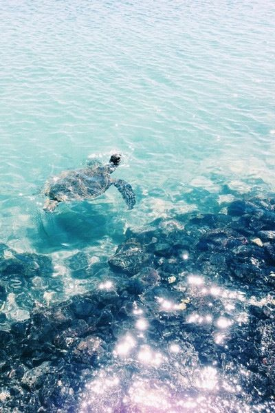 Crystal clear water, waves and a turtle. Click to shop swimwear by Matthew Williamson.: