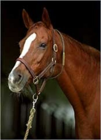 Secrettame - stakes winning daughter of Secretariat, she went on to be the dam of Gone West.