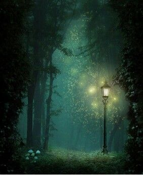 My magical forest...