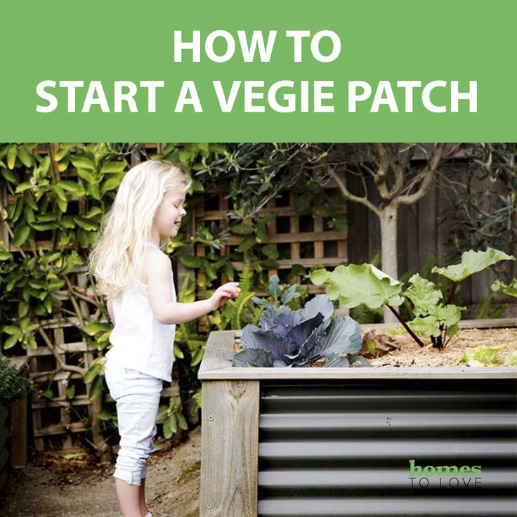 More people than ever are wanting to start a vegetable garden at home and grow their own vegies. Here are some basic gardening tips to help you design your own kitchen garden and get those vegetables growing.