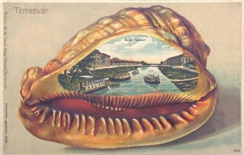 TIMISOARA 1901