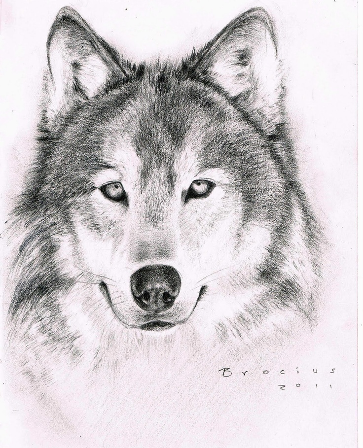 641 Best Images About Tattoos On Pinterest: 641 Best Images About Wolves On Pinterest