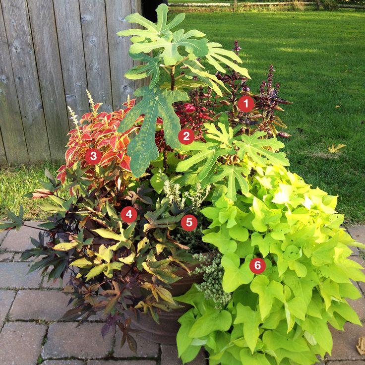 Best Full Sun Garden Ideas Images Home Design Ideas ankavosnet