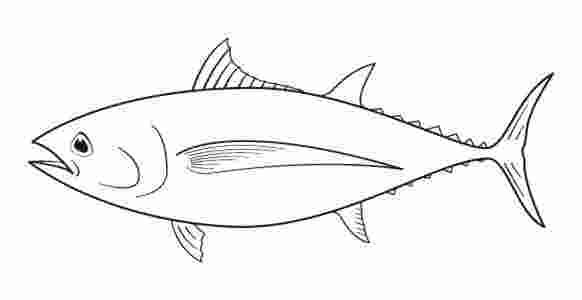 Tuna Fish Coloring Pages Tunas Achieve Endothermy By Conserving The Heat Generated Through N Fish Coloring Page Tuna Fish Coloring Pages