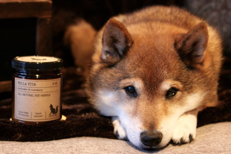 Pure Soy Wax Candles, scented with essential oils from our own custom blends. Burns cleaner, no toxins or pollutants, Will last 30-50% longer than a paraffin candle! Reuse/ upcycle, or recycle candle container. Little Fox = Shiba Inu