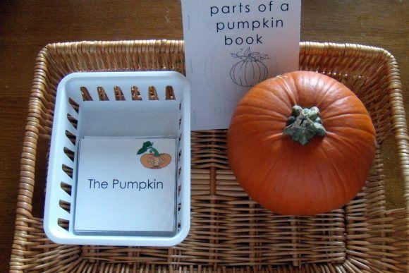 parts of a pumpkin fivehazelnuts montessori pinterest. Black Bedroom Furniture Sets. Home Design Ideas