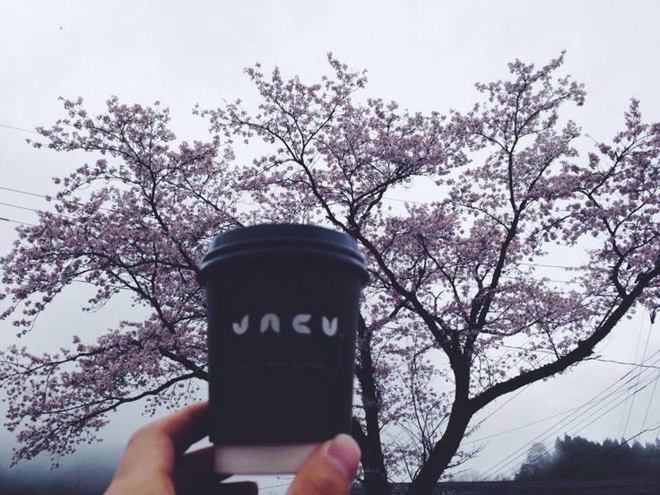 #travel #japan #jacu #coffee #sakura #cherryblossoms #jacucoffeeroastery