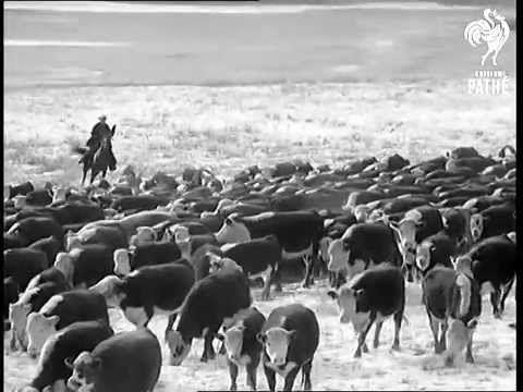 Newsreel of the Douglas Lake Ranch 1959 Roundup