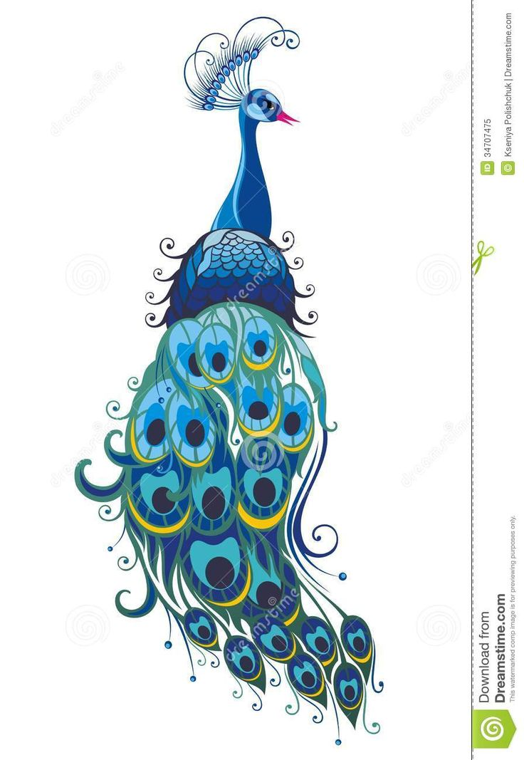 free peacock graphics - Google Search