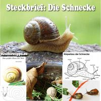 Projekt Wurm und Schnecke Kindergarten und Kita-Ideen