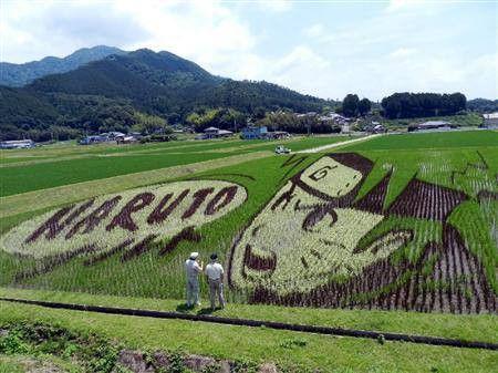 """NARUTO"" Rice Field in Okayama, Japan. The home of Masashi Kishimoto."
