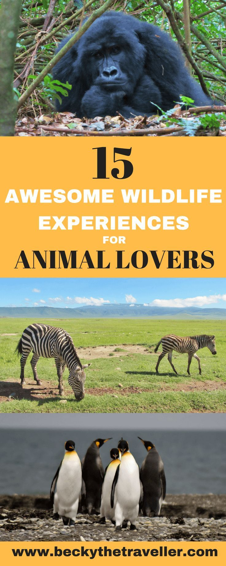 15 awesome wildlife experiences from around the world. Inspiration for animal lovers from African safaris to releasing turtles in Mexico. | Animal experiences | Wild animals | African safaris | Releasing turtles | Gorilla trekking |