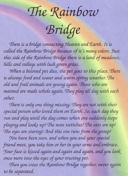 Rainbow Bridge Dog Heaven | Rainbow-Bridge-I know Dad was waiting to welcome Jake~~