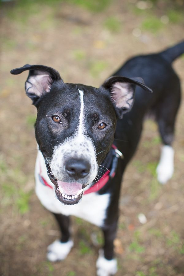 Adopt Me Humane Society Of Union County Nc With Images Dog