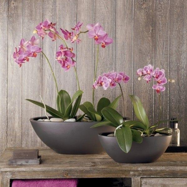 tipps-orchideen-pflege-lila-kies-schalen