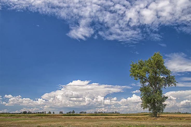 The Great Hungarian Plain