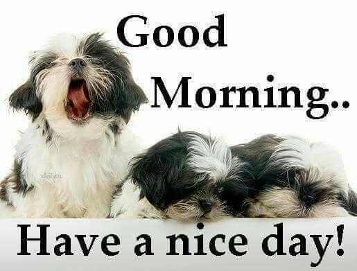 morning all