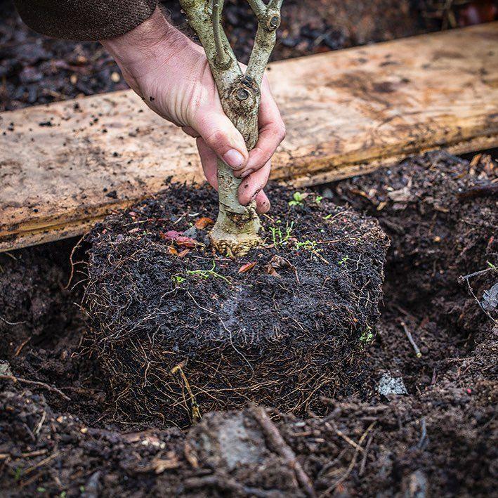 """Allt om Trädgård (@alltomtradgard): """"Vad gör ni i helgen? Det ska bli fint väder, så det kan bli perfekta dagar för plantering! Hösten är bra tid att plantera nya växter i trädgården. Jorden är sval och fuktigt och nyplanterade växter etablerar sig lättare"""""""