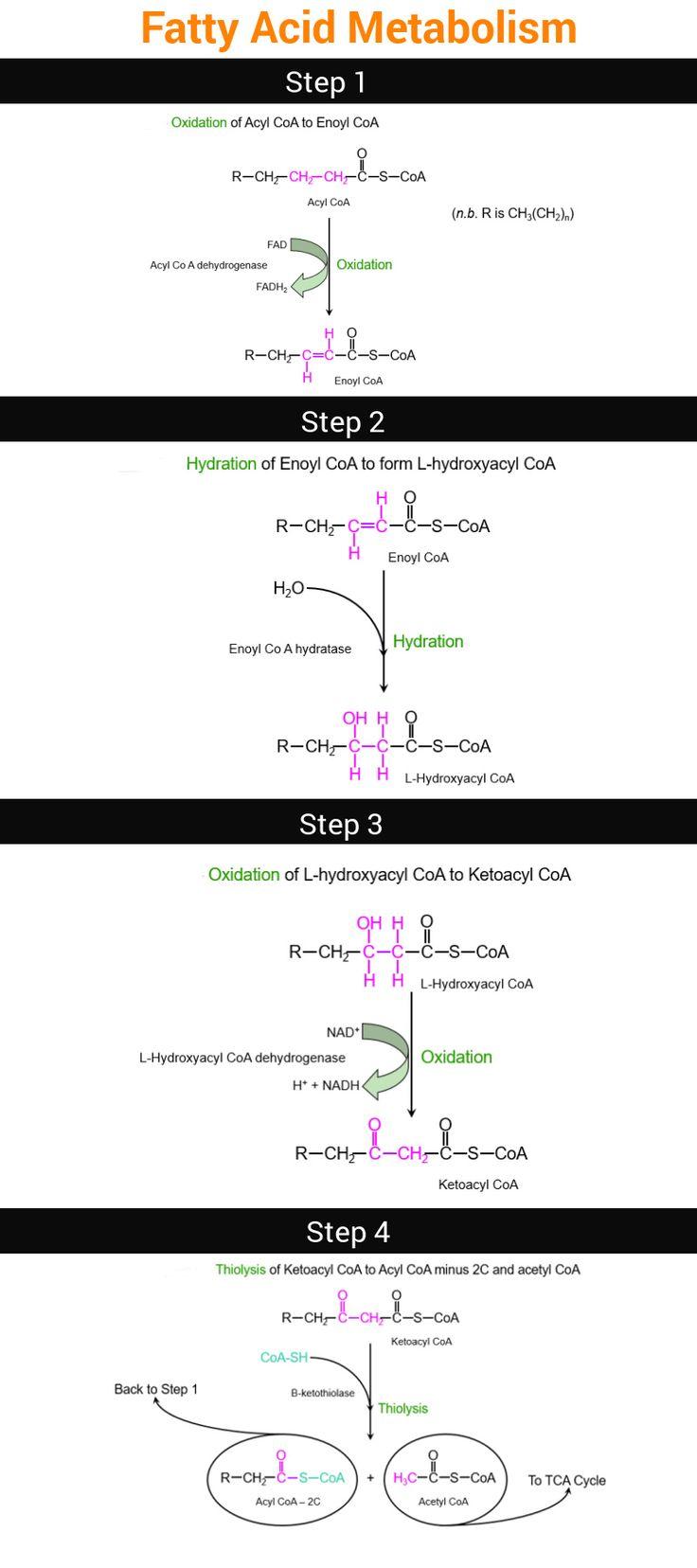 Fatty Acid Metabolism.  #gamsat #biology #fatty #acid #metabolism