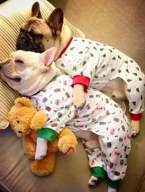 Night night, babies