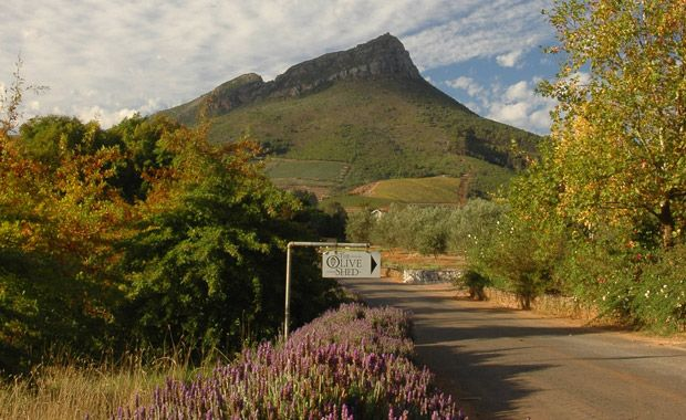 Tokara estate - The Olive Shed, South Africa