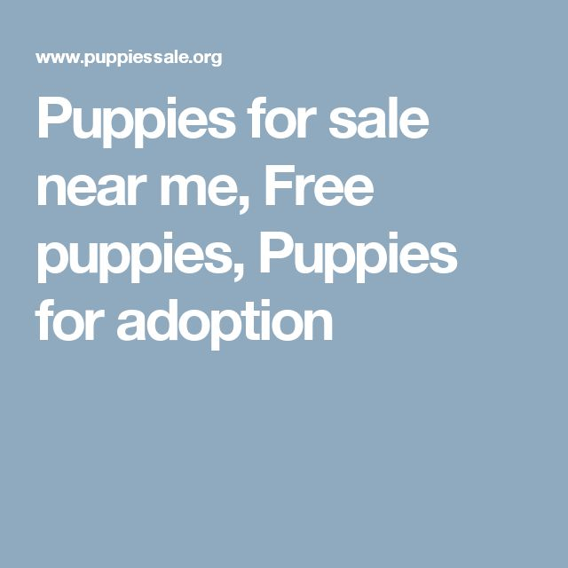 adoption near me pets world