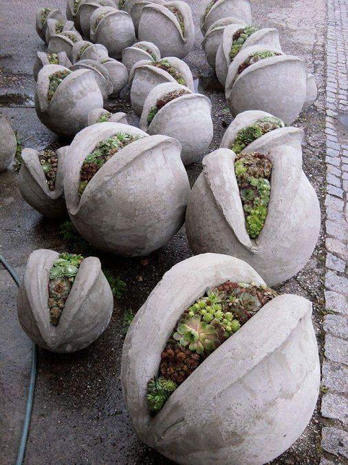 Amazing Things – Natur – Community – Google+ #concrete #cement #DIY #succulents
