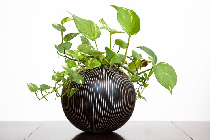 3 Houseplants to Help You Feng Shui Your Home for Spring ...