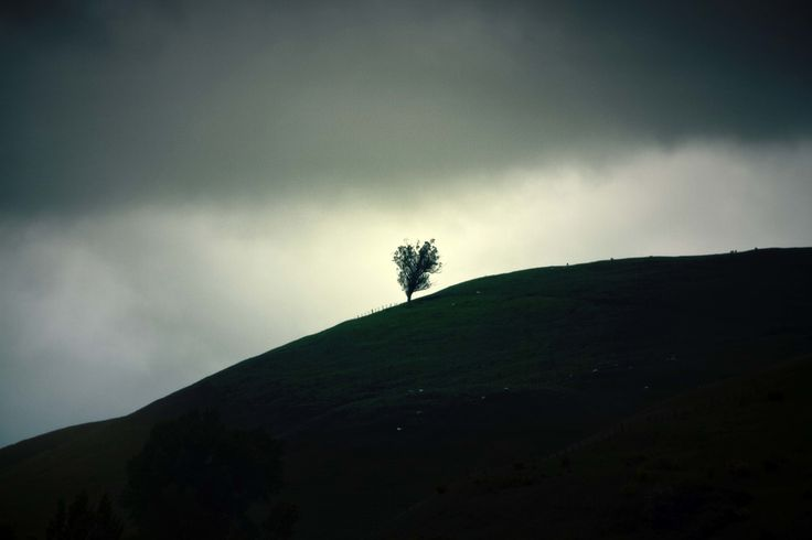 Just One Tree