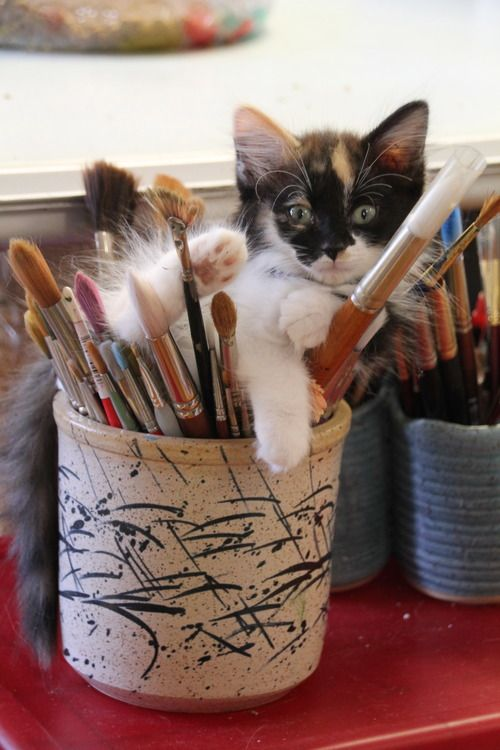 My studio is a small house - about 1000 square feet. That's about 500 more square feet than I really need on a daily basis so I share it. It's a permanent home for five cats as well as a foster home...