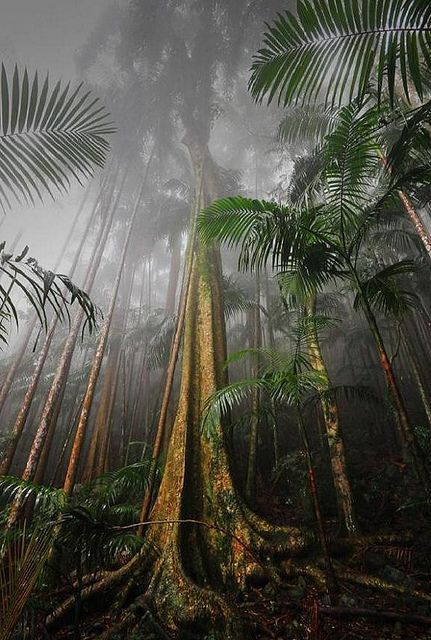 Mount Tamborine Rainforest, South East Queensland, Australia