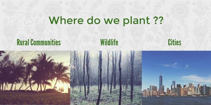 Where do we plant trees??    we at www.godforests.com plant trees on public lands, community lands, forests, outskirts of cities and also to provide with food and fodder to rural communities.