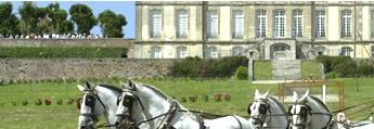 Percherons at the Haras du Pin