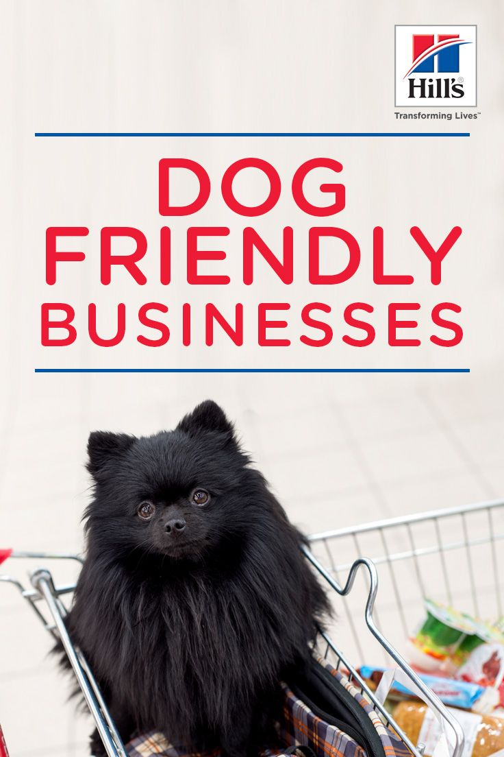 Taking Your Dog To Dog Friendly Businesses Dog Friends Your Dog