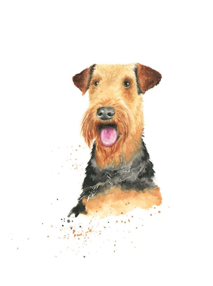 Airedale watercolour print, airedale terrier, airedale art, terrier print, dog art, dog lover, new dog, terrier watercolour, dog gift by LianneMarieArt on Etsy