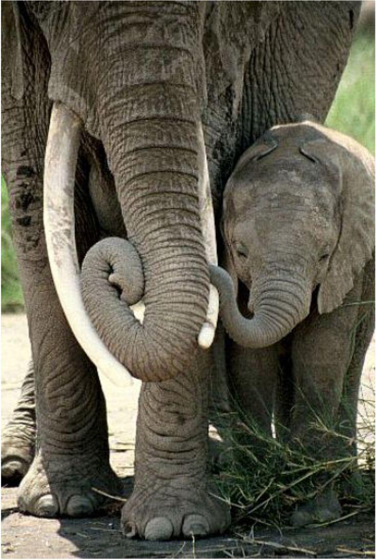 Bébé éléphant et maman ♥