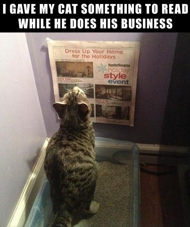 Funny Animal Pictures – Part I~ 23 Pics | Broke Girls Do Bad ThingsBroke Girls Do Bad Things
