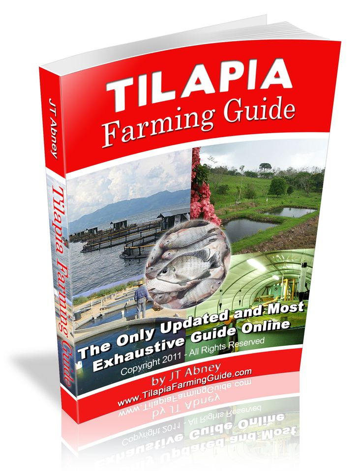 Best 25 tilapia farming ideas on pinterest tilapia fish for Is tilapia a man made fish